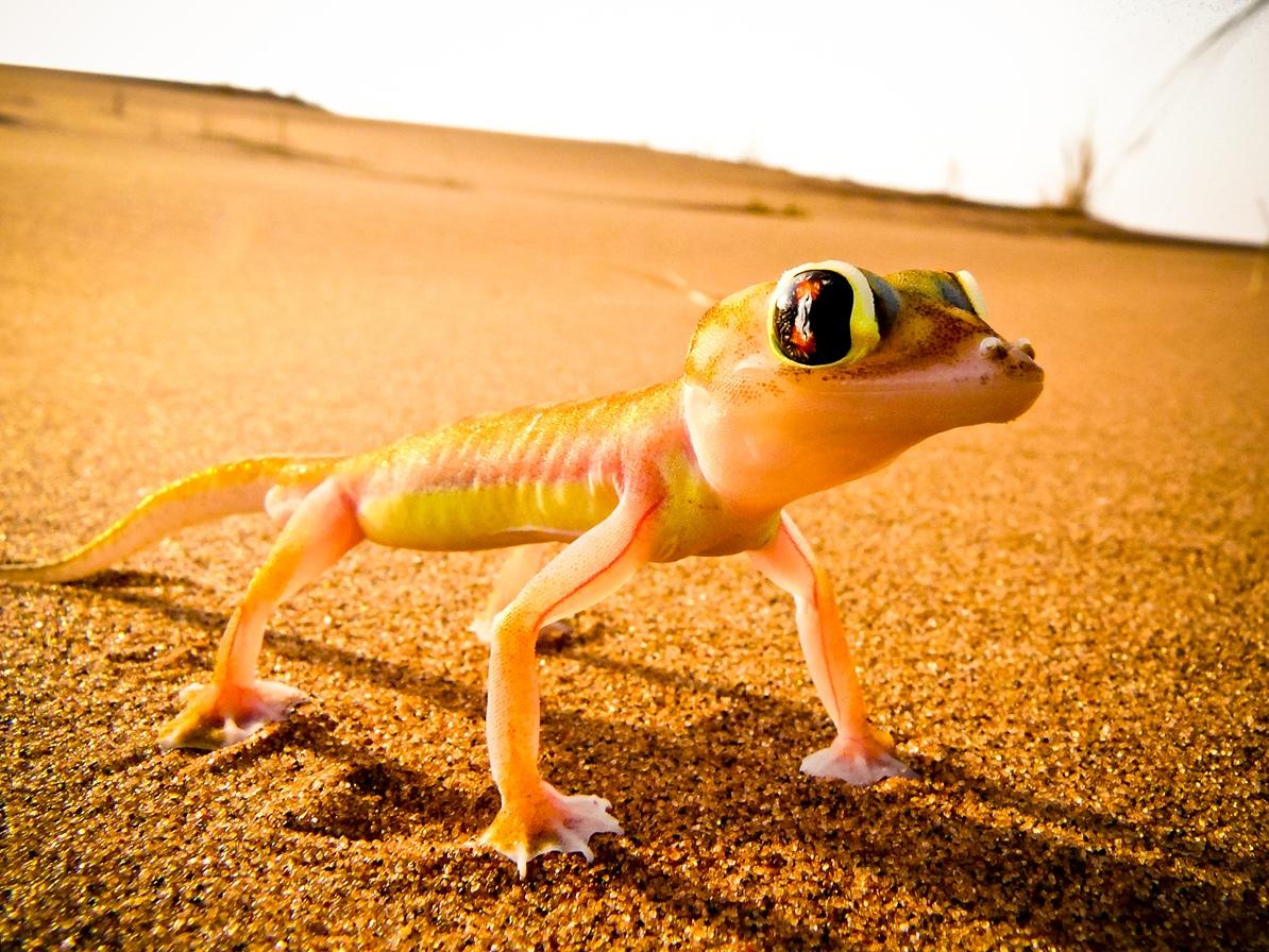 Animales en el desierto del Kalahari