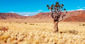 Paraíso del desierto del Kalahari